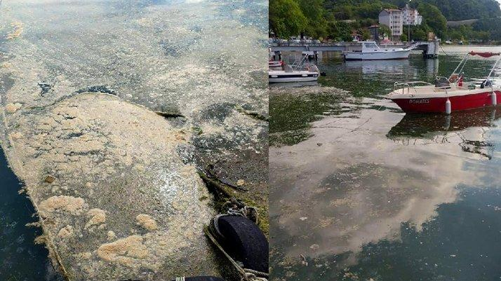 Deniz salyası kâbusu Karadeniz'de de görüldü