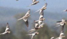 Dünyada 50 milyar kuş var. Serçe nüfusu birinci