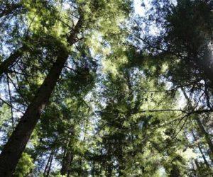 Ormanlara giriş ve ateş yakma yasağı uzatıldı