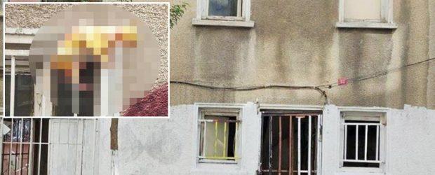 Kediyi boyayıp cama astı!